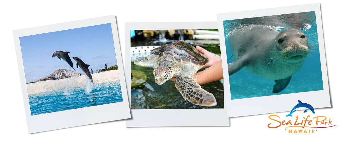 Photos of dolphins, a turtle and seal