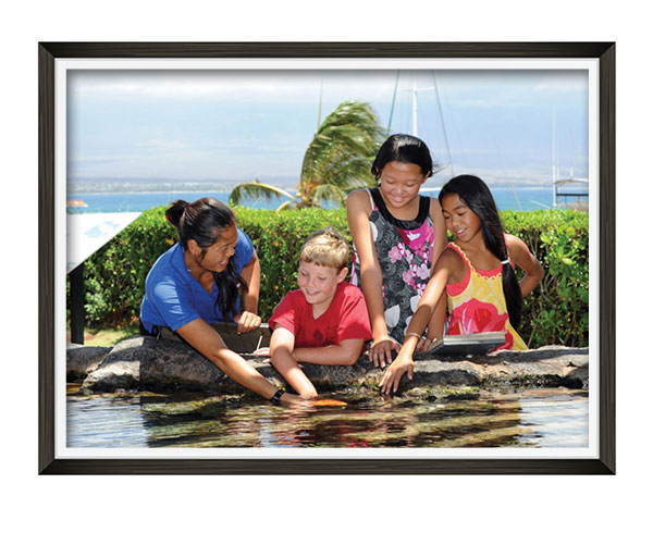 A photo of 3 children exploring a tide pool at the Maui Ocean Center with a staff member.